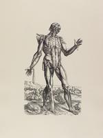 Tabulae Selectae, plate 16