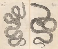 Aldrovandi's Snakes