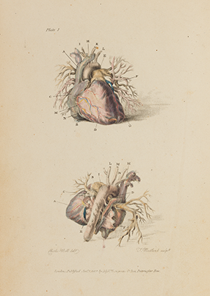 Image of page 21 from Engravings of the Arteries that links to page 21 in book reader view