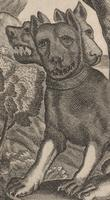 Kircher's Three-headed Dog