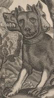 Kircher's Three-headed Dog