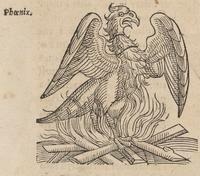 Lykosthenes' Phoenix with Flames