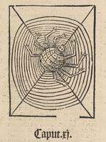 Spider, Hortus Sanitatis
