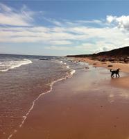 Cliff, beach, dog
