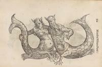Aldrovandi's Mer-Couple