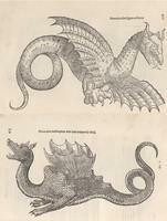 Aldrovandi's Dragons