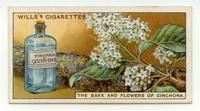 Wills's Cigarettes