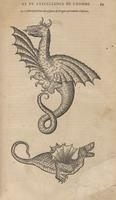 Two Dragons from Ambroise Paré
