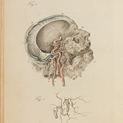Engravings of the Arteries